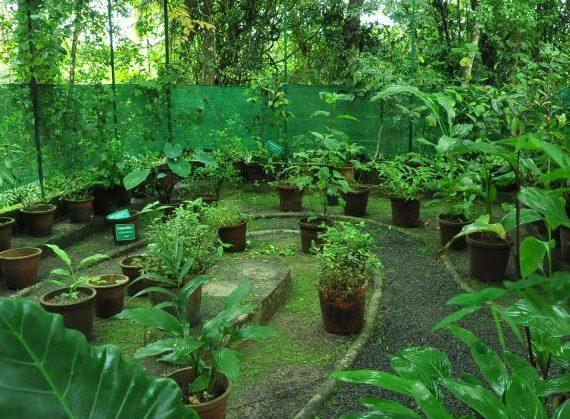 Wild Food Species Garden