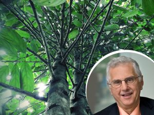 Dr. Bruce Alberts joins the GOD tree campaign!