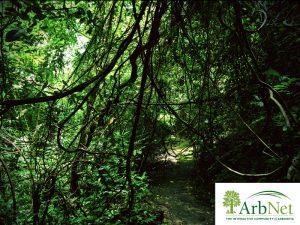 Level 1 Accreditation for the MSSBG Arboretum by the ArbNet Program