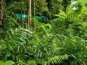 MSSBG awarded with 2020 Global Botanic Garden Fund