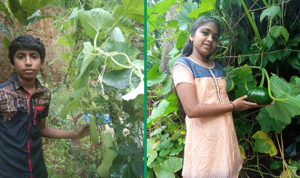 The Edible School project extended to 60 kitchen gardens of school students